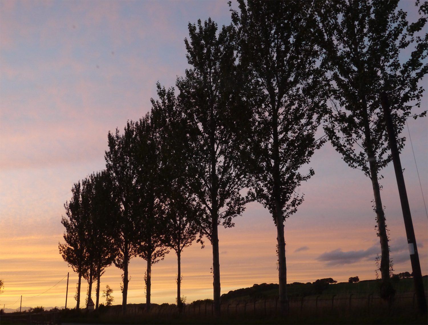 rowtrees